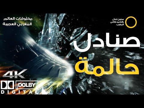 """برنامج مخلوقات العالم المغربي العجيبة : الحلقة السادسة """" صنادل حالمة"""".4k"""
