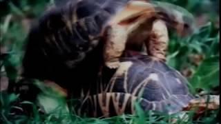 getlinkyoutube.com-Секс диких животных