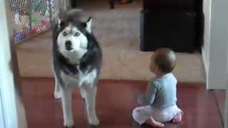เด็กพูดกับหมา