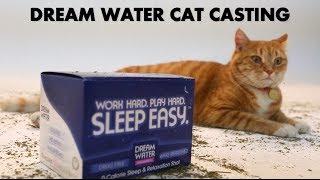 getlinkyoutube.com-YouTube's First Ever Cat Casting (PRANK VIDEO)