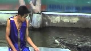getlinkyoutube.com-فيديو تمساح يأكل يد المدرب