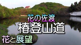 佐渡・花の椿登山道。ハイキングガイド