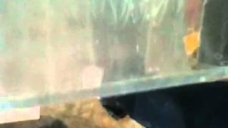 Acrylic aquarium scratch removal