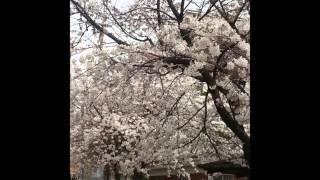 getlinkyoutube.com-김연자 골든 50 트로트 메들리 68분 13초