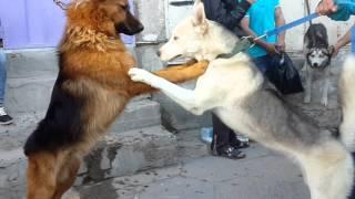 getlinkyoutube.com-حيوانات في سوق الغزل