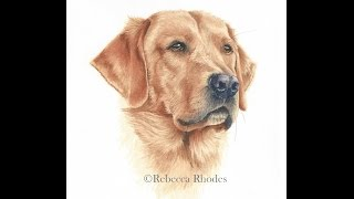 getlinkyoutube.com-How to Paint a Realistic Retriever Dog in Watercolor