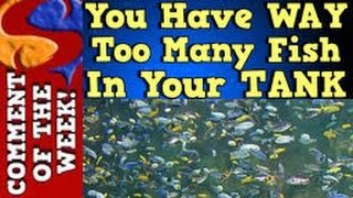 getlinkyoutube.com-You Have Way Too Many Fish In Your Tank!! Comment of the week Ep. 3