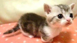 getlinkyoutube.com-Baby Animals - A Cute Animal Videos Compilation || NEW HD