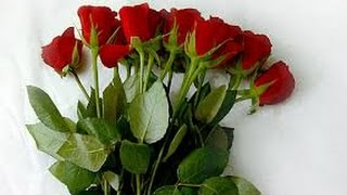 getlinkyoutube.com-How to Grow Roses and other Flowers in a GreenHouse - for Export - TvAgro por Juan Gonzalo Angel
