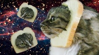 getlinkyoutube.com-DONT TELL MY CAT - Bread That Cat