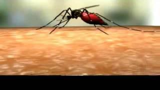 getlinkyoutube.com-Ciclo de vida Aedes Aegypti