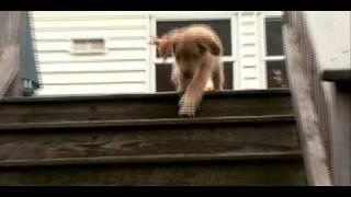 Dogs 101 - Golden Retriever width=