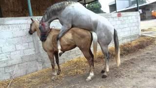 Apariamiento de caballo