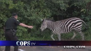 getlinkyoutube.com-In Hot Pursuit, Wildest COPS Chases, COPS TV Show
