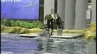 getlinkyoutube.com-NH Family Shares Video Of Deadly Sea World Show