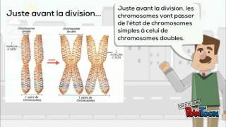 getlinkyoutube.com-Pour réviser... La division cellulaire