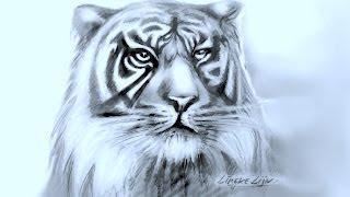 getlinkyoutube.com-Hoe teken je een Tijger / dieren tekenen / #19