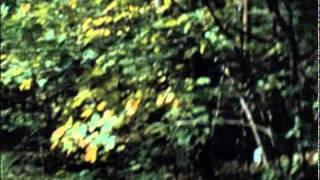 The Last House on the Left Official Trailer #2 - David Hess Movie (1972) HD