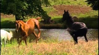 getlinkyoutube.com-Black Beauty - Horse Whisperer Theme
