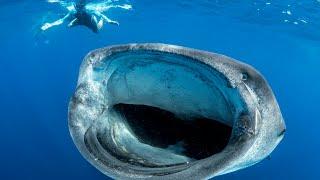 getlinkyoutube.com-BIGGEST FISH IN THE WORLD - MEXICO
