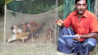 getlinkyoutube.com-Alternative Income Generation: Poultry farming