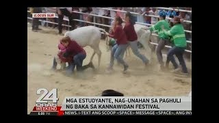 24 Oras: Mga estudyante, nag-unahan sa paghuli ng baka sa Kannawidan Festival