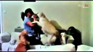 getlinkyoutube.com-Perros defienden a niño de los golpes de su madre