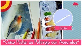 getlinkyoutube.com-Curso de Acuarelas para Principiantes: como pintar un Petirrojo en la lluvia