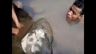 getlinkyoutube.com-Pemburu ikan senggal 2