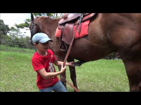 Parte 3 Como selar o Cavalo