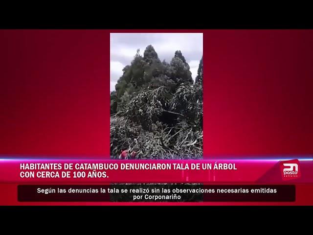 Habitantes de Catambuco denunciaron la tala de un árbol  con cerca de 100 años