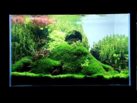 Just Aquascaping - little ecospace