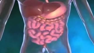 getlinkyoutube.com-د محمد الفايد : التجانس الغذائي - النظام الغذائي الصحي و السليم -
