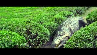 Croczilla (clip) Crocodile pole dance