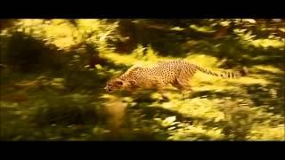 getlinkyoutube.com-El habitat y adaptacion al medio ambiente