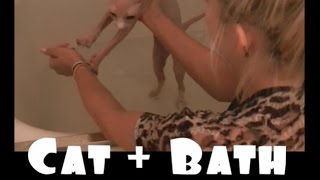 getlinkyoutube.com-Hairless Cat Bath Problems