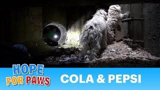 getlinkyoutube.com-Hope For Paws: Bonded poodles struggling to survive in a sewer get a heartwarming rescue