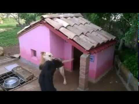 Come costruire una cuccia per cani in muratura animali for Costruire cuccia per cani