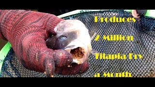 getlinkyoutube.com-Sustainable Tilapia Hatchery