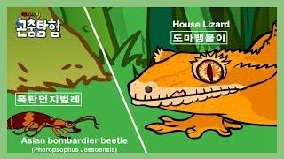 getlinkyoutube.com-곤충탐험 #9 폭탄먼지벌레(Bombardier Beelte) vs. 도마뱀붙이(House Lizard) | Insect animation for kids | 昆虫