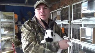 getlinkyoutube.com-Кролики в 3 месяца 4кг. !!!