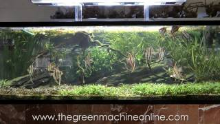 getlinkyoutube.com-Aquascaping Shop Tour of The Green Machine