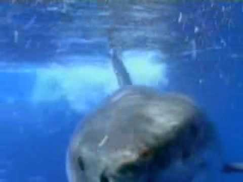 Los tiburones, documental discovery channel