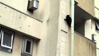 getlinkyoutube.com-二階から落ちる猫
