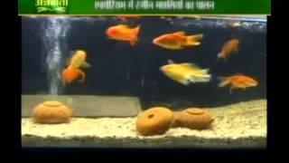 एक्वेरियम में रंगीन मछलियों के पालन पर जानकारी