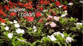 Cogliere i colori a Merano