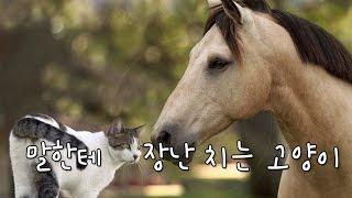 getlinkyoutube.com-말 한테 장난치는 아기고양이 아찔함 (EmonTV)