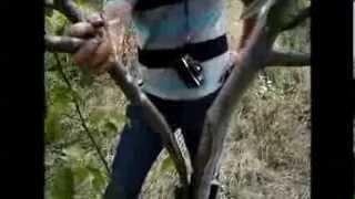 getlinkyoutube.com-Консультации ореховода - Вилка может  убить дерево