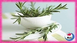 ¿Para que sirve el romero? - Propiedades curativas y beneficios del romero para la salud