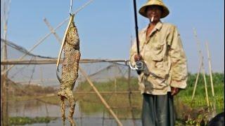 getlinkyoutube.com-ตกปลาเหยื่อกิ้งก่าสดคลองโตนเลสาบ Tonle Sab Fishing in Cambodia
